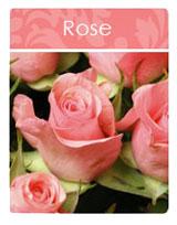 Rose Incense
